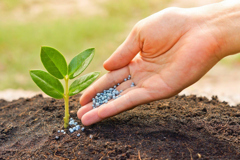 Удобрения для растения