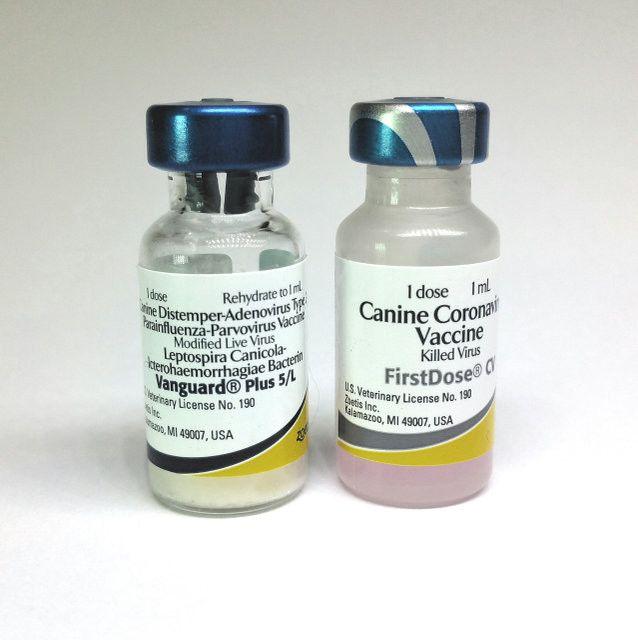 вакцина вангард 5 с коронавирусом